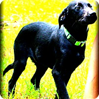 Adopt A Pet :: Blair - Glastonbury, CT