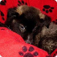 Adopt A Pet :: Howie - Normandy, TN