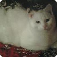 Adopt A Pet :: Yoshi - Bloomsburg, PA