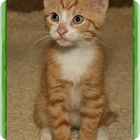 Adopt A Pet :: Jimmy - Shippenville, PA