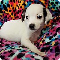 Adopt A Pet :: Cindy - Staten Island, NY