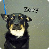 Adopt A Pet :: Zoey - Defiance, OH