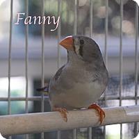 Finch for adoption in Bradenton, Florida - Fanny