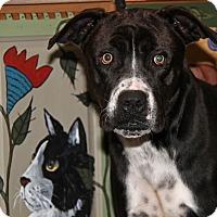 Adopt A Pet :: Ferris - Marietta, OH