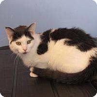 Adopt A Pet :: Selena - Northfield, MN