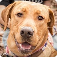 Adopt A Pet :: Reba - Daleville, AL