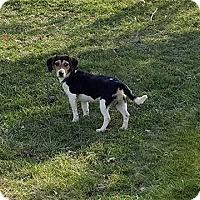 Adopt A Pet :: Kevin - Sparta, NJ