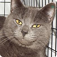 Adopt A Pet :: Ava - Grants Pass, OR