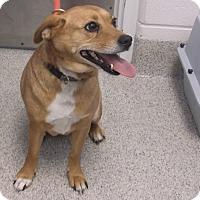 Adopt A Pet :: SASSY - Gloucester, VA