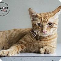 Adopt A Pet :: Crosby - Phoenix, AZ