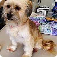 Adopt A Pet :: Suzy - Vista, CA