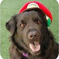 Adopt A Pet :: Layla - Scottsdale, AZ