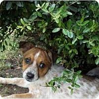 Adopt A Pet :: Daphne - In CT! - Adamsville, TN
