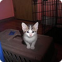 Adopt A Pet :: Squeaky - Warren, MI