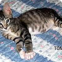 Adopt A Pet :: Tom - Winter Haven, FL