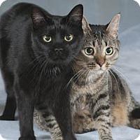 Adopt A Pet :: Zippy & Sneezy - Chicago, IL