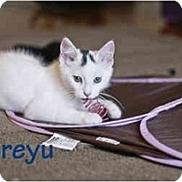 Adopt A Pet :: Atreyu - New York, NY
