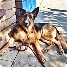 Adopt A Pet :: Gillian the Wonder Dog