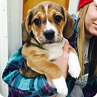 Adopt A Pet :: Hadley - Arden, NC