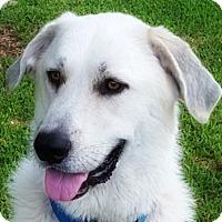 Adopt A Pet :: Wally - Kyle, TX