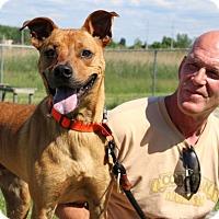 Adopt A Pet :: Bandit-Prison Dog - Elyria, OH