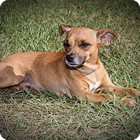 Adopt A Pet :: Theo - Weeki Wachee, FL