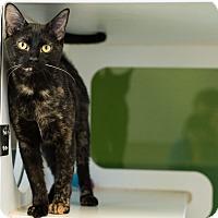 Adopt A Pet :: Posha - Houston, TX