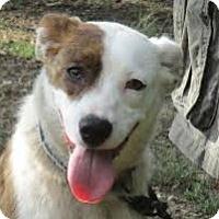 Adopt A Pet :: Kasey - Baltimore, MD