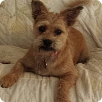 Adopt A Pet :: LACEY - Wilmington, NC