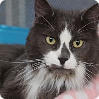 Adopt A Pet :: Smokey - Sarasota, FL