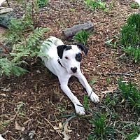 Adopt A Pet :: ADDY - EDEN PRAIRIE, MN