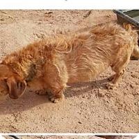Adopt A Pet :: Trucker - Tonopah, AZ