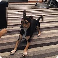 Adopt A Pet :: Khal Drogo - Houston, TX
