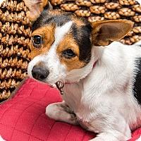 Adopt A Pet :: Mia - Miami, FL