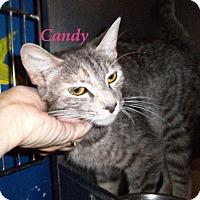 Adopt A Pet :: Candy - El Cajon, CA