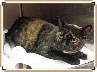 Domestic Mediumhair Cat for adoption in Marietta, Georgia - THEA