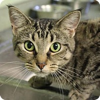 Adopt A Pet :: Golden Bay - Indianapolis, IN