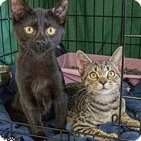 Adopt A Pet :: Turkey - Merrifield, VA