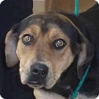 Adopt A Pet :: Angel - Orangeburg, SC