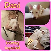 Adopt A Pet :: Dani - Mesa, AZ