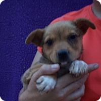 Adopt A Pet :: Duchess - Oviedo, FL