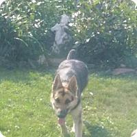 Adopt A Pet :: Jada - Lewistown, PA
