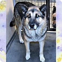 Adopt A Pet :: Clifford - San Jacinto, CA