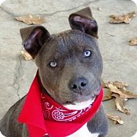 Adopt A Pet :: Newman - Baytown, TX