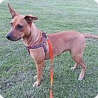 Adopt A Pet :: Carolina - Bardonia, NY