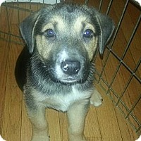 Adopt A Pet :: Ozzie(ADOPTED!) - Chicago, IL