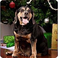 Adopt A Pet :: Zeus - Owensboro, KY