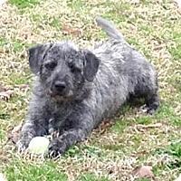 Adopt A Pet :: *Topeka - PENDING - Westport, CT