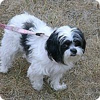 Adopt A Pet :: BANDY - cameron, MO