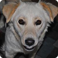 Adopt A Pet :: Melanie - Rockaway, NJ
